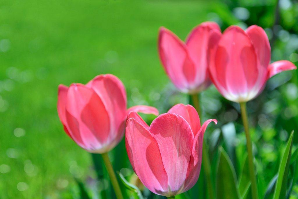 Ogród na różowo