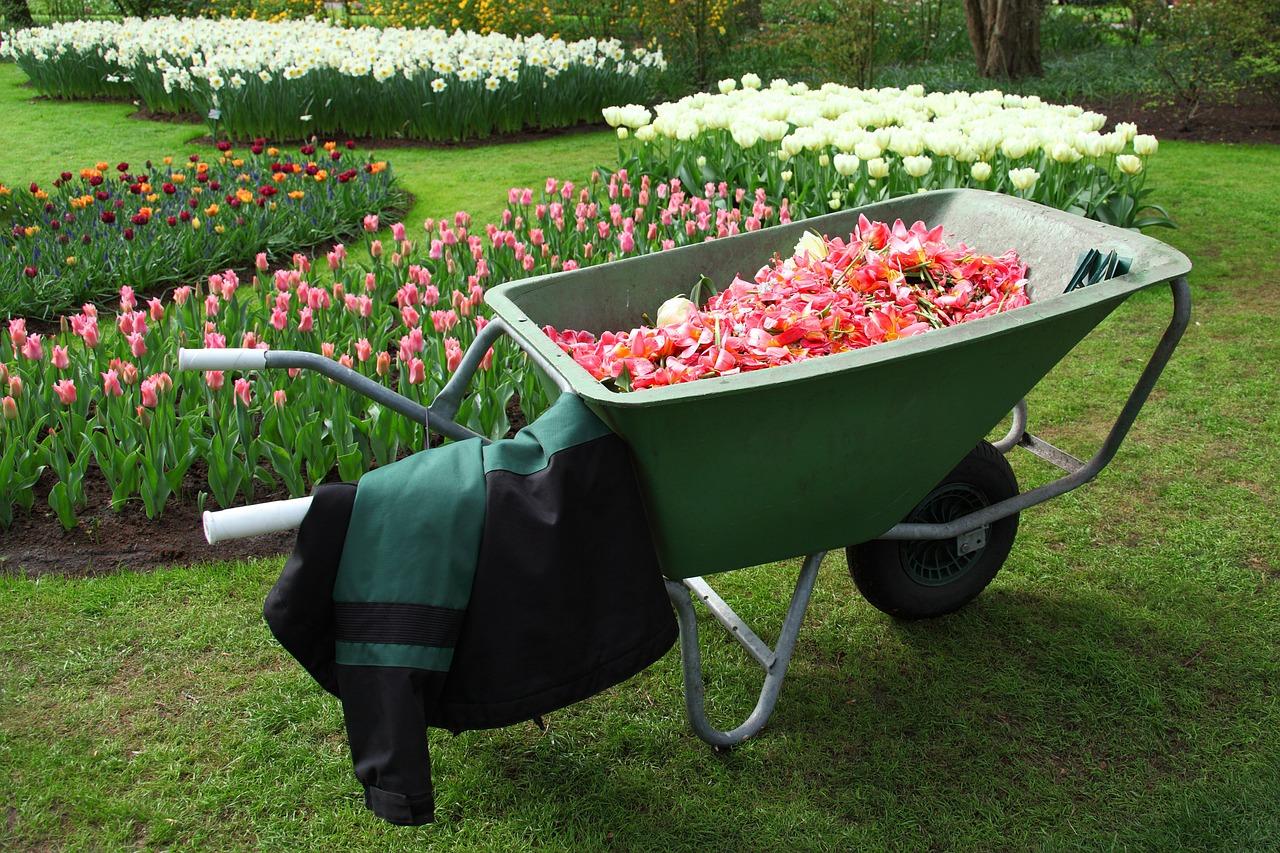 Taczka i inne narzędzia - co przyda ci się w ogrodzie?