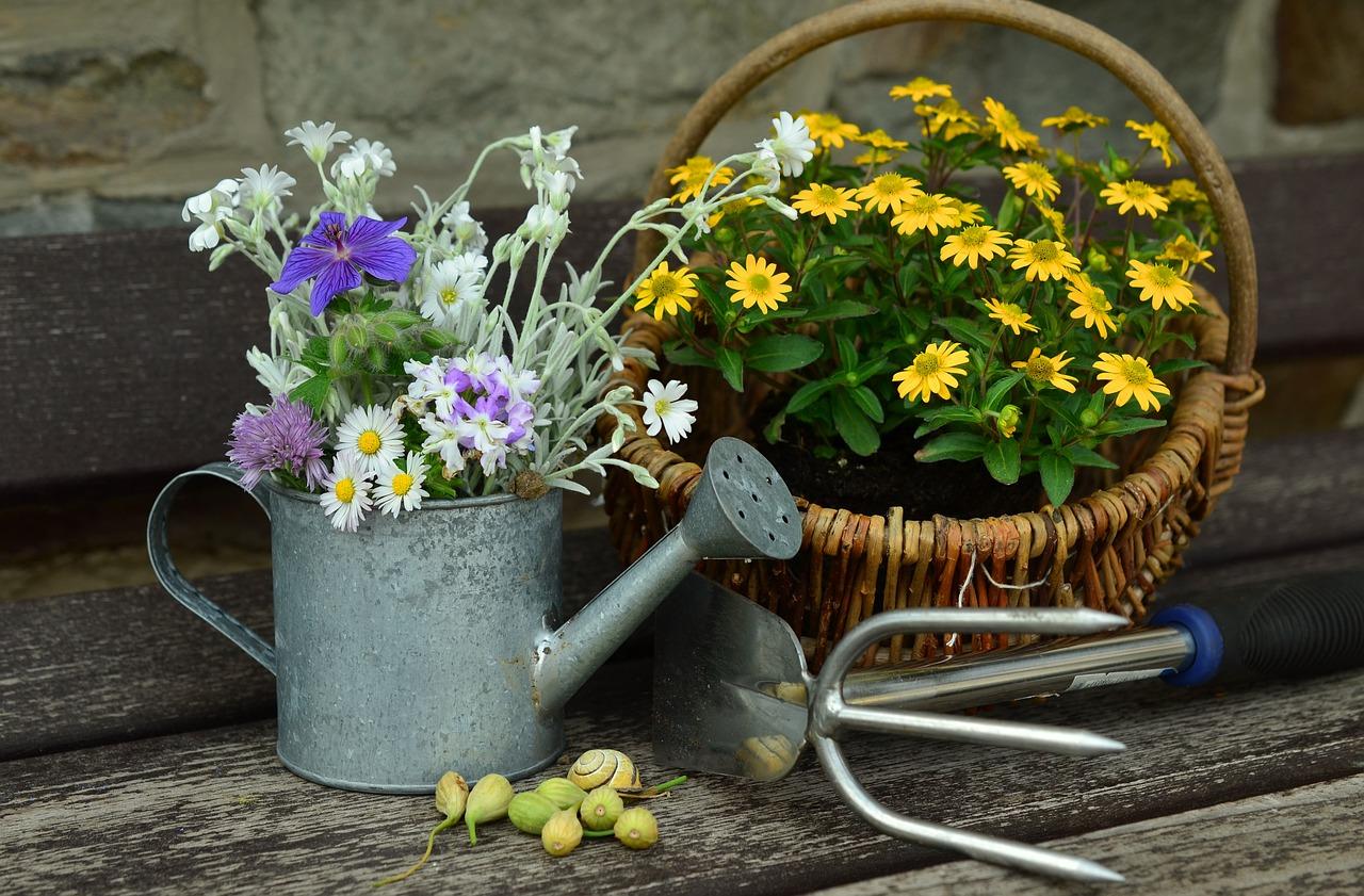 Jakie rośliny warto zasadzić w ogrodzie?