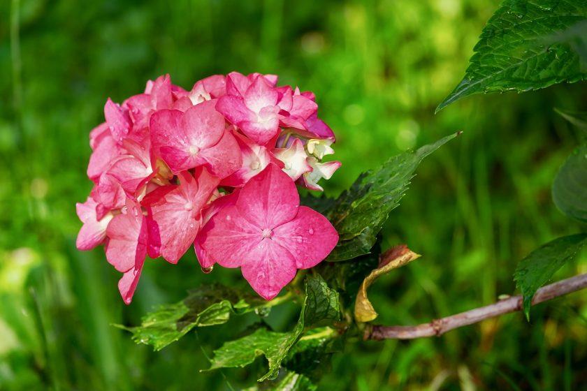 Jakie kwiaty do ogrodu wieloletnie wybrać?